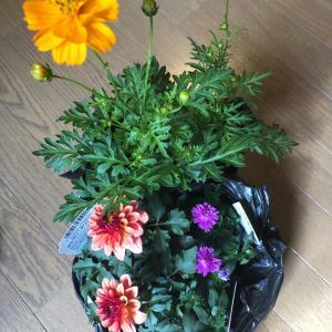 久々のお花購入