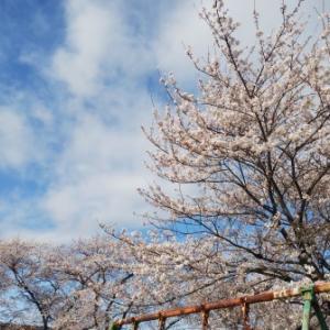 時期が来れば桜は咲く