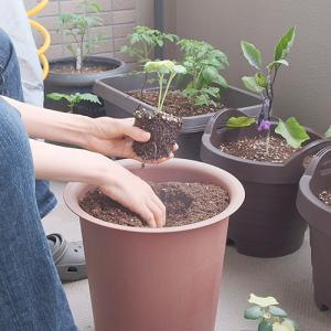 ベランダ菜園の一週間。ポットからプランターへ植え替えと小さな発芽