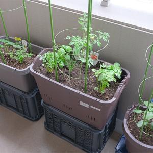 プランターで寄せ植え菜園