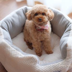 「すっきりシンプル。ミニマリストのモノ選びの基準」と、ラディカの秋冬犬ベッド