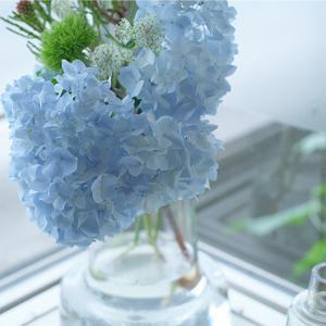 紫陽花とか、梅仕事の準備とか