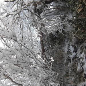 瓶ヶ森林道(UFOライン)の瓶ヶ森の霧氷