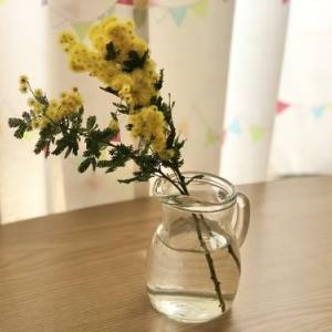 【春の花】ミモザを飾りました