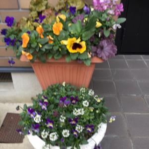 令和初 気分も新たに花の植え替え完了です