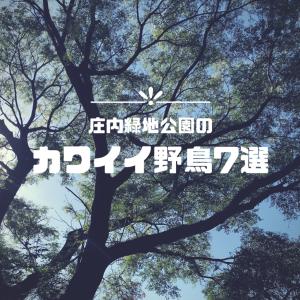 庄内緑地公園のカワイイ野鳥7選!【愛知のレジャースポット】