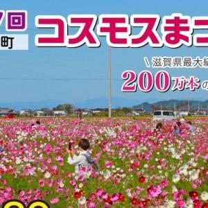 2019年『第17回 野田町コスモスまつり』(近江八幡市)