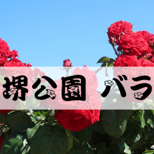 2020年5月 庄堺公園バラ園(彦根市)STAY HOME TOWN 滋賀