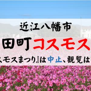 2020年『野田町コスモスまつり』(近江八幡市)の開催は?