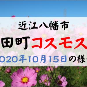 野田町コスモス畑の様子(2020年10月15日)満開だけど・・・