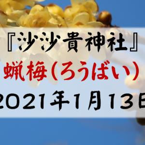 沙沙貴神社の蝋梅(ろうばい)が見頃に(2021年1月)