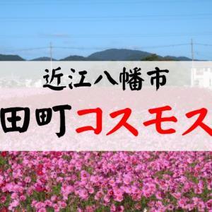 2021年『野田町コスモスまつり』開催と開花状況まとめ