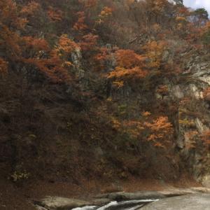 紅葉に彩られる吹割の滝に行ってきた