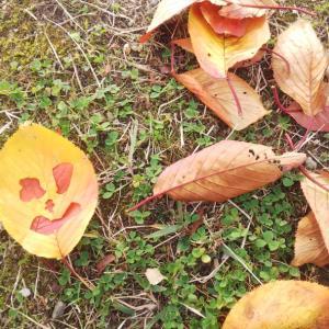 秋の公園での一人遊びが、ぐちゃぐちゃ遊びになっていた!