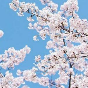 ママになって感じたとても特別な季節。春。
