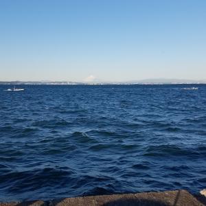 大貫港、下洲港で釣り!秋の太刀魚を狙ってたはずが、、、大量のメバル。