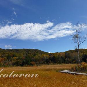 玉原高原ハイキング♪湿原の紅葉を堪能
