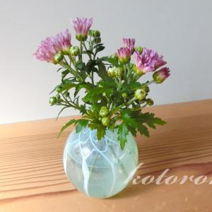 お盆用今年No.1の菊は「かんもも」&寒菊植えました。