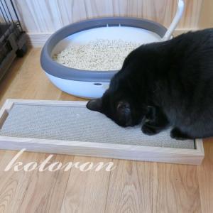 おすすめ!カインズ猫グッズ「爪とぎ+ケース」ペッツワン
