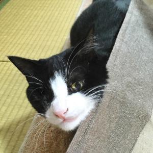 日々のネコ(第151猫)「嬉しそうな顔」