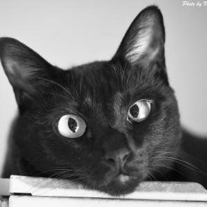 日々のネコ(第167猫)「モノクロネコ」