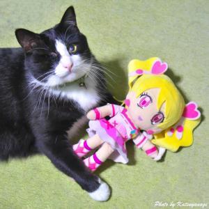 日々のネコ(第170猫)「可愛がり」