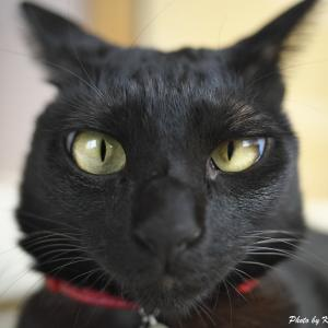 日々のネコ(第171猫)「めぢから」