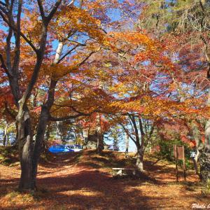 秋の深まり、紅葉の色づき --- 埼玉県長瀞町 月の石もみじ公園 ---