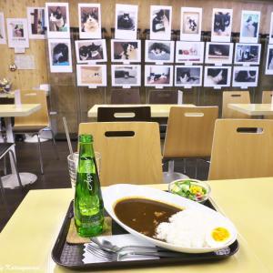末広がりの幸せ猫 〜ハチワレ猫仲間の写真展〜