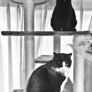 日々のネコ(第192猫)「上下関係」