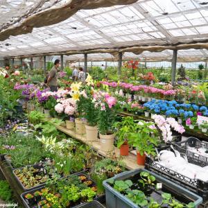 季節の花で、心に潤いを --- 深谷市 埼玉県花植木流通センター ---