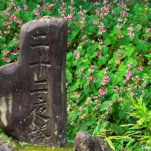 令和2年、二十二夜塔の秋海棠 --- 埼玉県小川町 秋海棠の群生地 ---