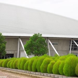 秋晴れの空と十月桜とコキアと(その1) --- 熊谷市 熊谷スポーツ文化公園 ---