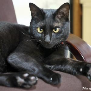 日々のネコ(第102猫)「黒猫感謝の日」