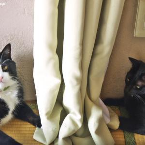 日々のネコ(第103猫)「対峙」
