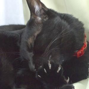 日々のネコ(第105猫)「爪を切るタイミング」