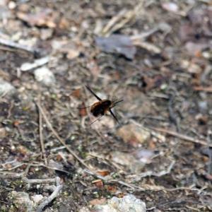 【写真】ビロードツリアブ、ベニシジミ、キタキチョウ(蝶)