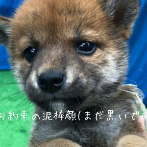 柴犬ワンコとのくらし【2】見学編
