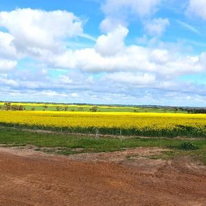 オーストラリア南部農場の春の様子 ~9月から暦上の春なのです~