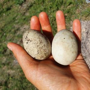 2021年のイースターはリアル・エッグハントに挑戦!究極に古い卵を割ってみると・・・