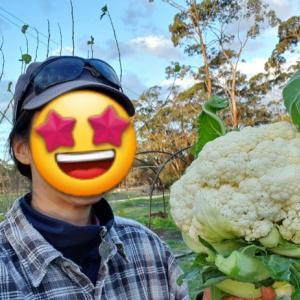 【自給自足】【家庭菜園】今シーズンの青果自給自足率は90%!家計は月1万円以上浮きました~♪