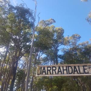 ジャラハニーの『ジャラの木』の知られざるあれこれ。ゲ○のような臭い!?