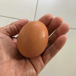 チェンマイブラブラ 生卵食す
