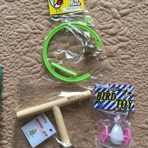 インコたちのおもちゃ