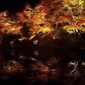 京都高台寺の特別拝観は夜がおすすめ!近くのレストランアカガネのフレンチディナーもおいしい