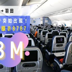 【熊本→羽田】国際線仕様の78M!シートモニターも備えた全日本空輸(ANA)B787-8搭乗記
