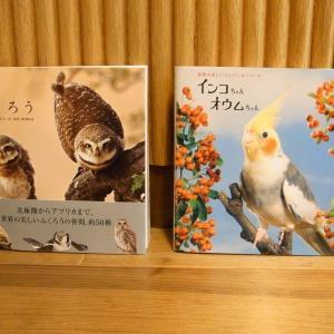 癒しの鳥写真集 「ふくろう」&「インコちゃんオウムちゃん」