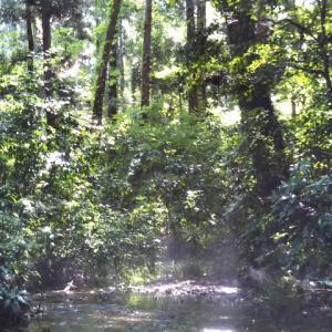 小川の水面近くに靄