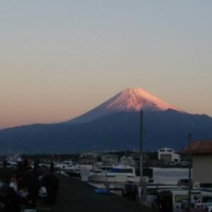 静岡県 静浦漁港に行ってきた。