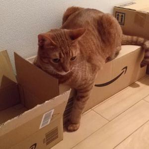 猫さん、ダンボール三昧